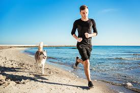 jogging with australian shepherd the 15 best dog breeds for runners hiconsumption
