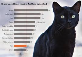 black friday pet adoption why don u0027t people adopt black pets