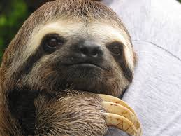 Sloth Meme Generator - motivational sloth meme generator imgflip