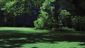 Moonlighting Landscape Lighting Showcase Lighting Nitetime Decor Moonlighting