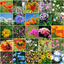 wildflower seed packets n borders wildflower seed mix