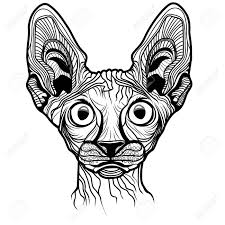 sphynx cat clipart face pencil and in color sphynx cat clipart face