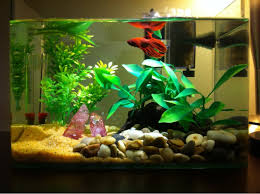 Home Decor Sale Uk by Fish Tank Pirate Lego Fishank In My Home Decor Pinterest