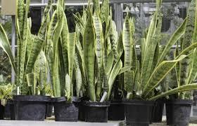 best indoor plants that don u0027t require much light gardening