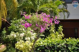 Garden Haus Kaufen Haus Kaufen Choeng Thale 393046
