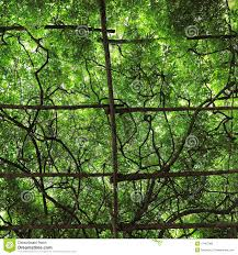 vine trellis stock photos download 1 177 images