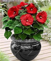 Cheap Flower Seeds - bonsai plants picture more detailed picture about 100 pcs