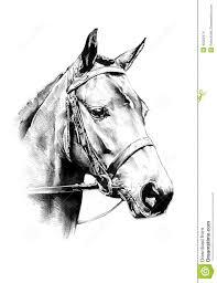 photo collection horse head pencil