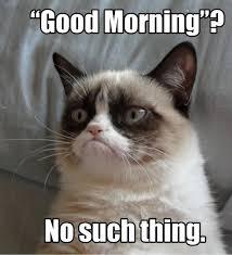Good Morning Cat Meme - good morning cat meme cat planet cat planet