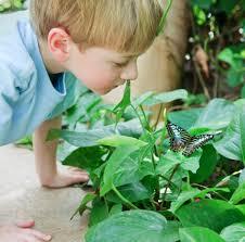 native plants for butterfly gardening benton soil u0026 water visit tucson botanical garden