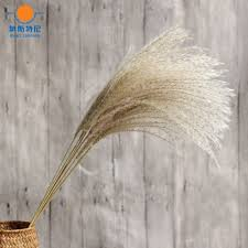 dried natural flower bouquets natural dried reed flowers u0026bulrush