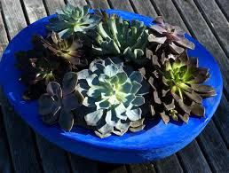 making a succulent plant container garden