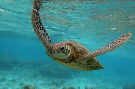 world turtle day facts and figures about conservation and protection