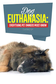 dog euthanasia dog euthanasia what to expect and how to prepare for it
