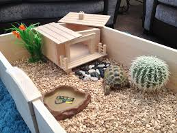 Tortoise Home Decor by Summer House
