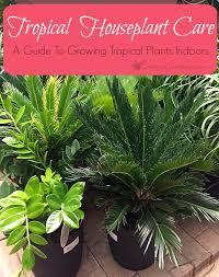 Plants To Grow Indoors Tropical Houseplant Care A Guide To Growing Tropical Plants Indoors