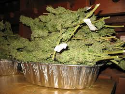 what is the best way to dry and cure your bud