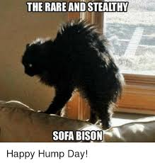 Hump Day Memes - the rare andsteathy sofa bison happy hump day hump day meme on