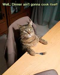 Random Cat Meme - humorize your day with 35 random funny pics team jimmy joe