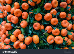 Fruit Decoration For New Year by Closeup Full Frame View Bright Red Stock Photo 369862349