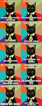 Buisness Cat Meme - 60 best business cat images on pinterest kitty cats business cat