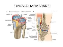 Back Knee Anatomy Knee Joint Anatomy