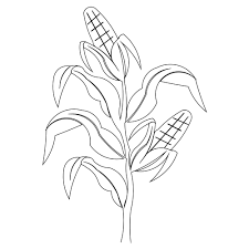 coloring pages of corn youtuf com