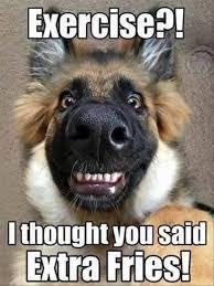 Moo Meme - 23 best deja moo images on pinterest ha ha so funny and funny stuff