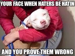 Pitbull Meme - smug pitbull meme generator imgflip