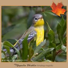 Maryland birds images Carroll county maryland birds and blooms jpg
