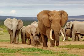 african safari animals african hunting safaris