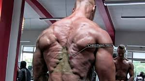 shredded back but what is the tree