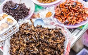 insectes cuisine les insectes nourriture du futur