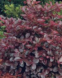 80 best zone 7 plants shrubs and trees images on