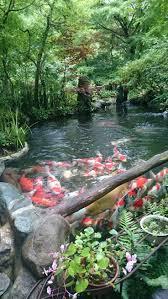 126 best koi images on pinterest backyard ponds gardens and