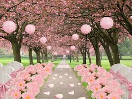 wedding place cherry blossom wedding ideas hotref party gifts