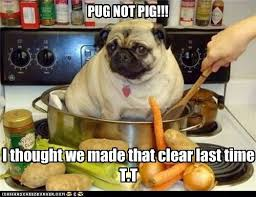 Dog Cooking Meme - i has a hotdog pot funny dog pictures dog memes puppy