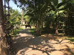 Hotel Flower Garden Unawatuna by Ayurvedic Village Garden Unawatuna Top Tips U0026 Facts Before You