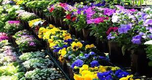 international flower festival sikkim