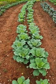 the organic weed free garden proverbs 31 woman