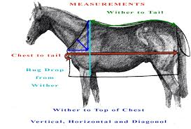 How To Measure For A Rug Horse Rug Measurements Roselawnlutheran