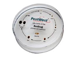 light bed bug infestation bed bug detection kit pestwest usa