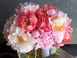 where to buy peonies 5 things you need to for growing peonies southern living