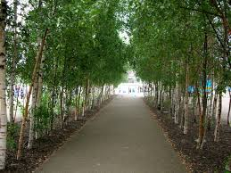 trees help improve the quality of in our town cities