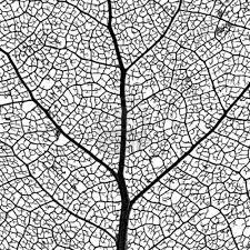 25 unique leaf skeleton ideas on pinterest arm and hammer