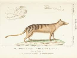 science or art beautiful illustrations of animals from 170 years