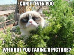 Tard The Grumpy Cat Meme - 249 best grumpy cat images on pinterest cute kittens funny