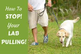 loose leash walking how to stop your dog pulling on leash