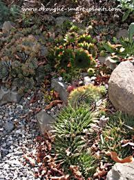 rock gardens crevice gardens cliffs and screes