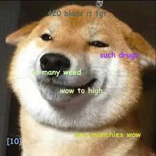 Doge Meme Tumblr - stoned doge doge know your meme